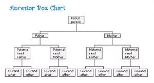 Ancestor Box Chart